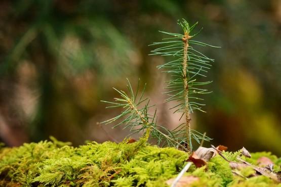 Mein Klimabaum - kostenloser Baumsetzling erhalten